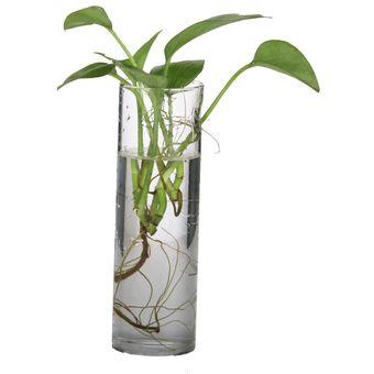 magideal cilindro claro pared de vidrio de botella florero colgante para las de flores de